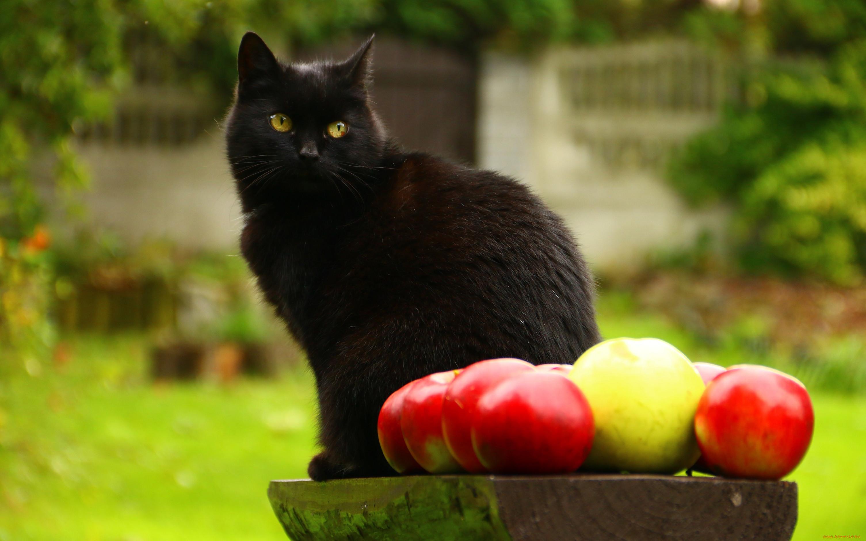 Картинки котики с фруктами центров печати